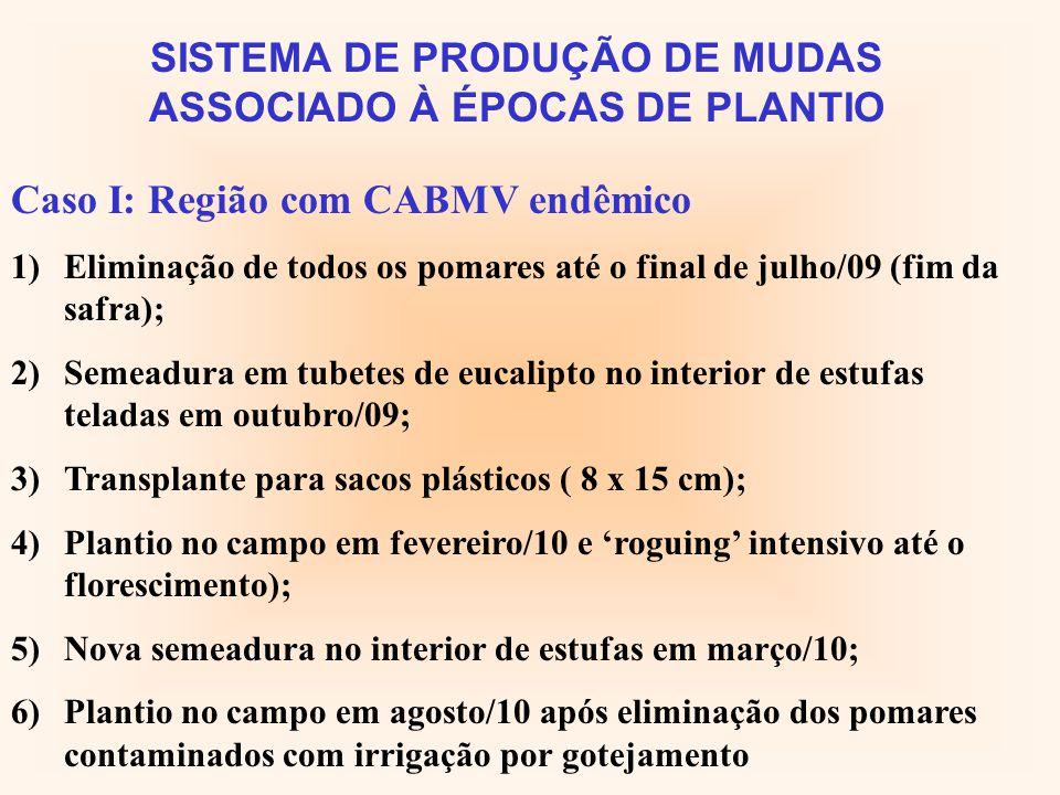 SISTEMA DE PRODUÇÃO DE MUDAS ASSOCIADO À ÉPOCAS DE PLANTIO