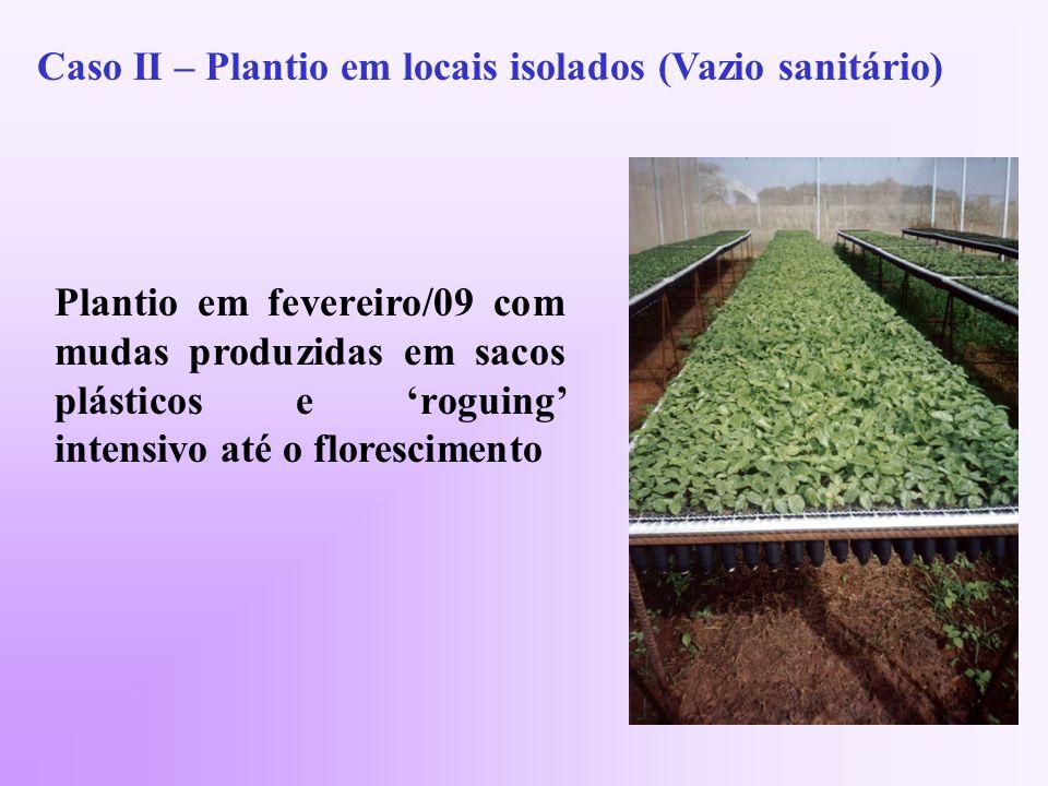 Caso II – Plantio em locais isolados (Vazio sanitário)