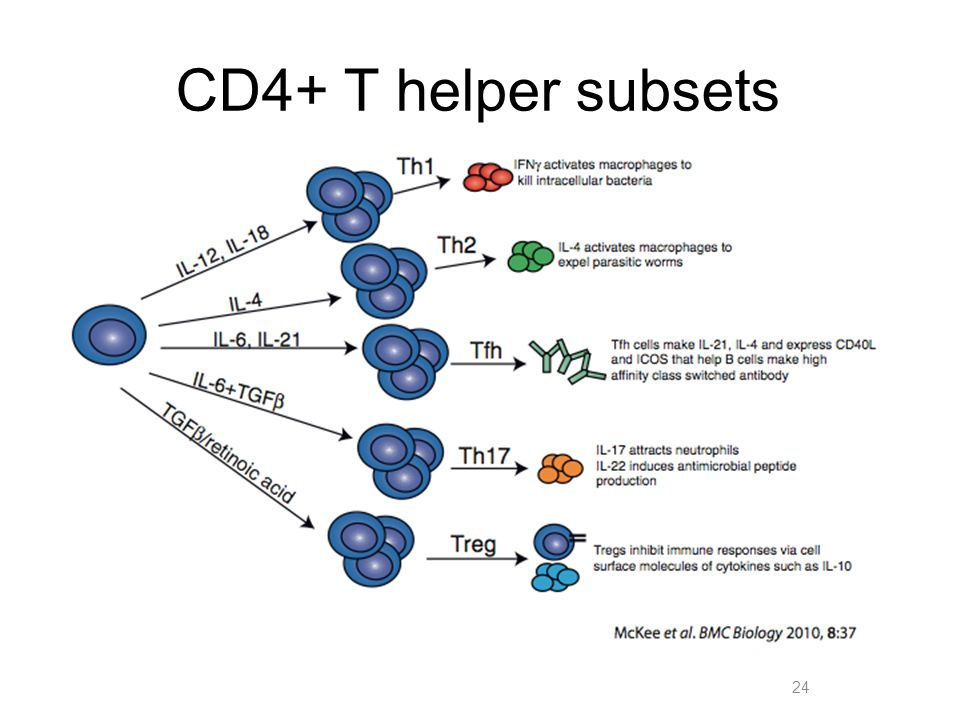 CD4+ T helper subsets