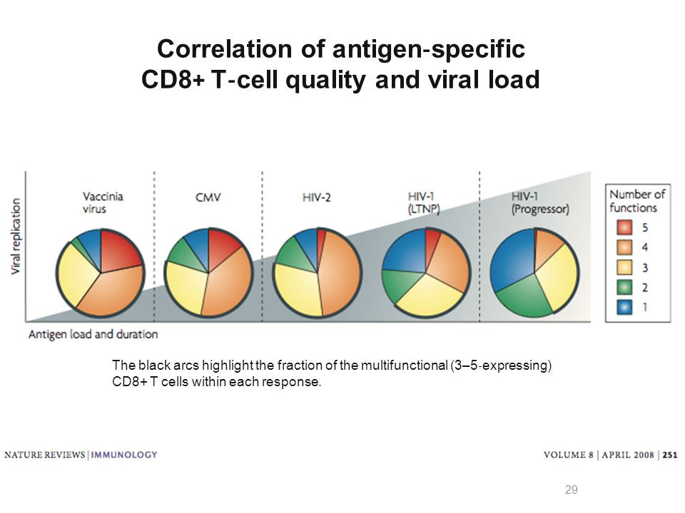 Correlation of antigen‐specific CD8+ T‐cell quality and viral load