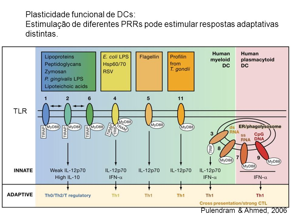 Plasticidade funcional de DCs: