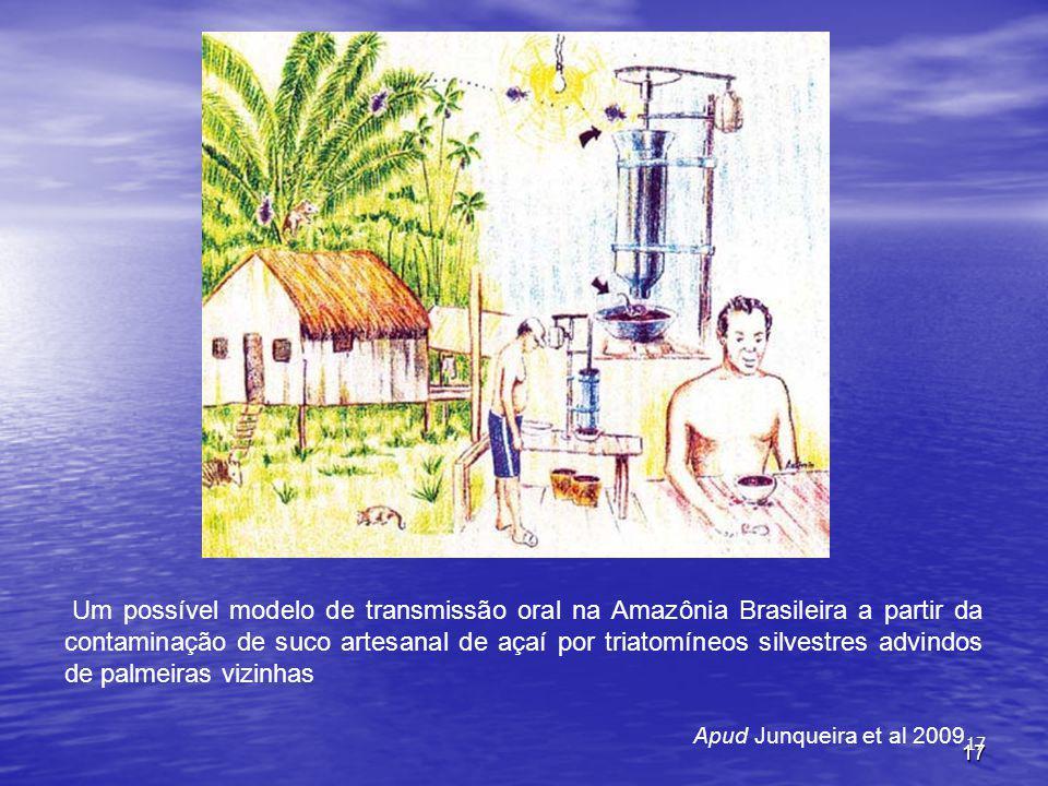 Um possível modelo de transmissão oral na Amazônia Brasileira a partir da contaminação de suco artesanal de açaí por triatomíneos silvestres advindos de palmeiras vizinhas