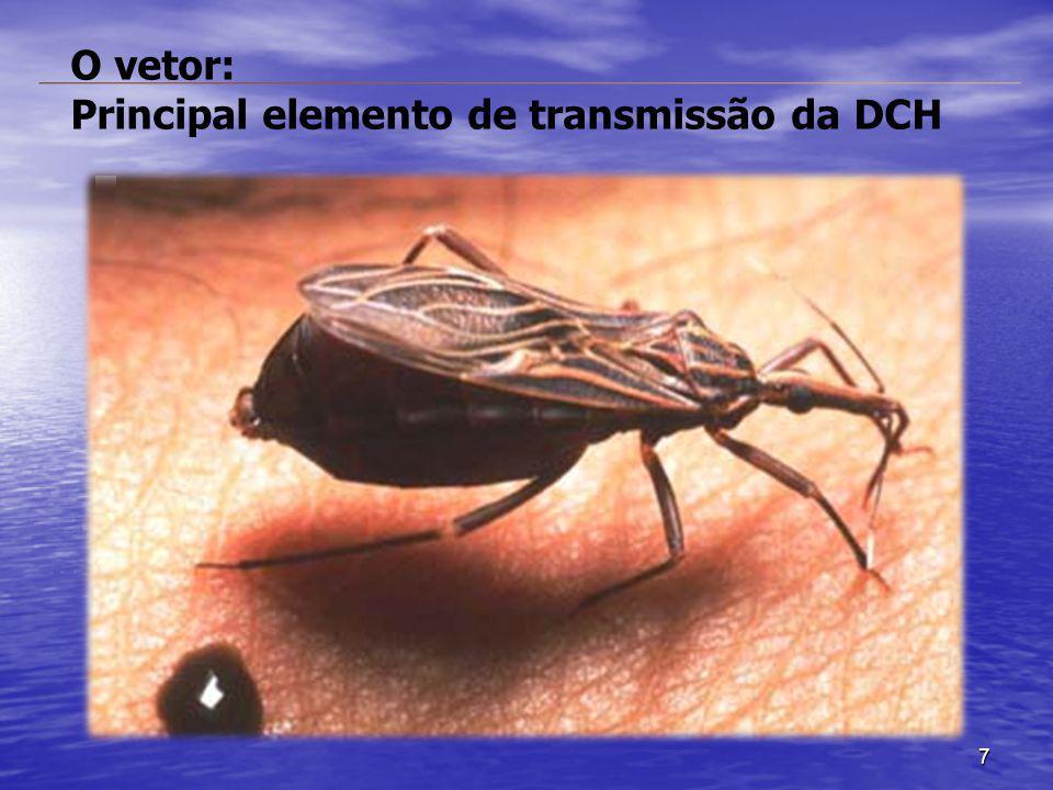 O vetor: Principal elemento de transmissão da DCH