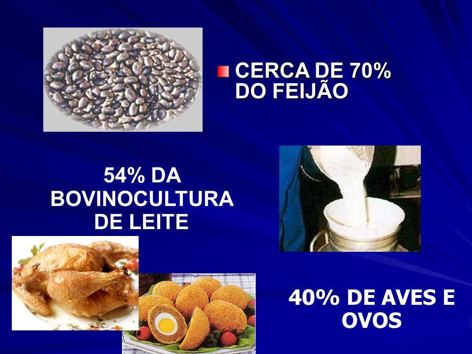54% DA BOVINOCULTURA DE LEITE
