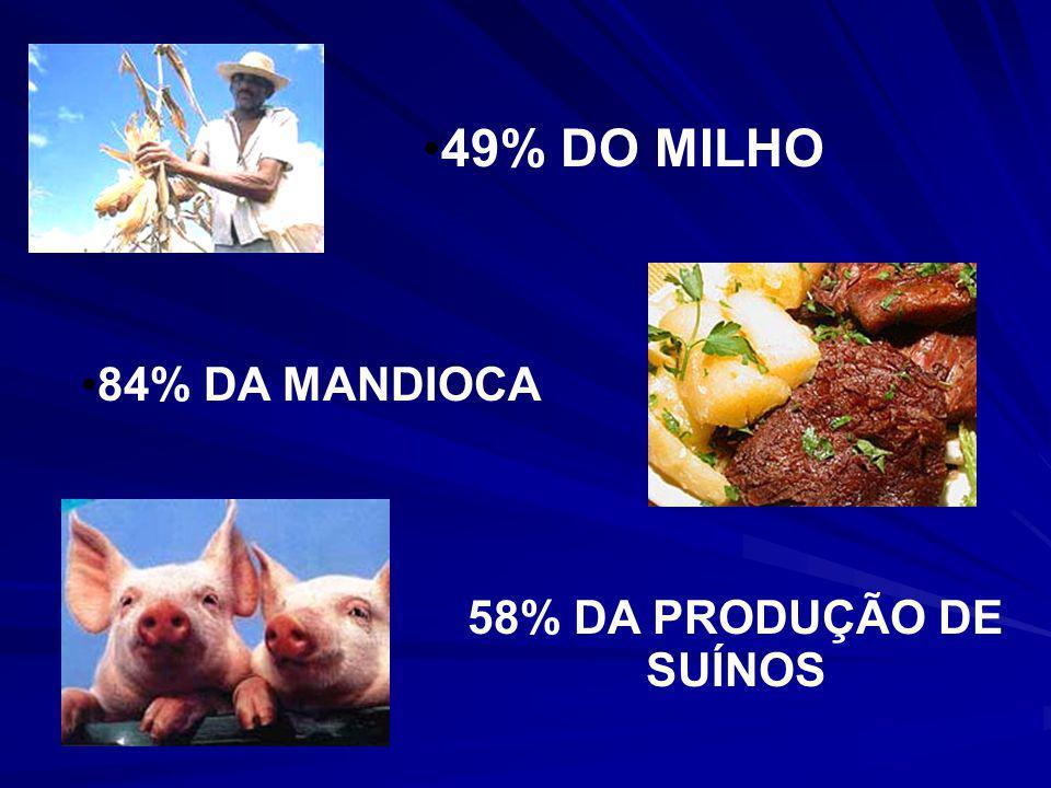 49% DO MILHO 84% DA MANDIOCA 58% DA PRODUÇÃO DE SUÍNOS