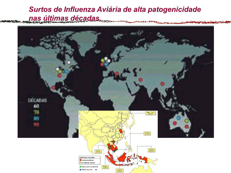 Surtos de Influenza Aviária de alta patogenicidade