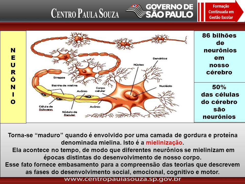 das células do cérebro são neurônios