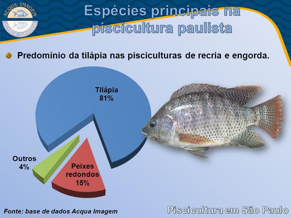 Espécies principais na piscicultura paulista