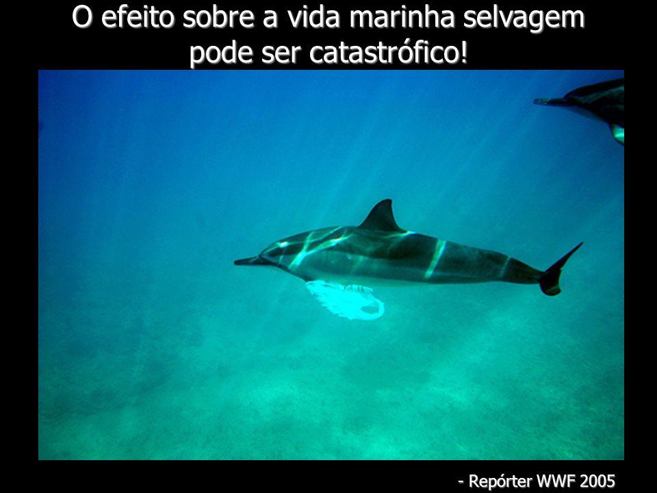 O efeito sobre a vida marinha selvagem pode ser catastrófico!