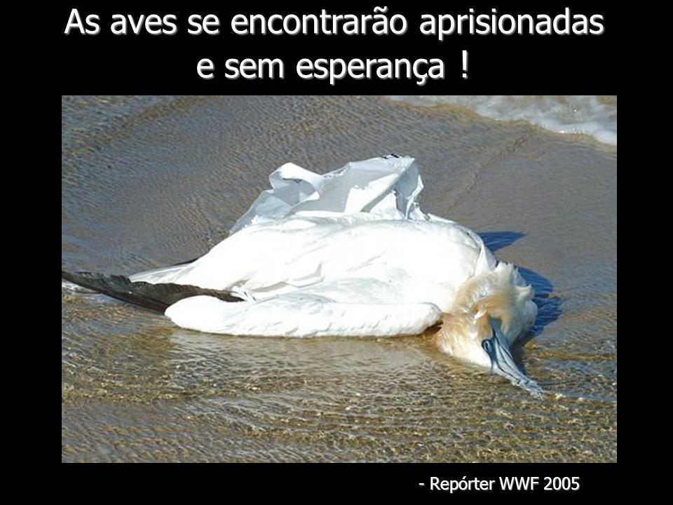 As aves se encontrarão aprisionadas e sem esperança !