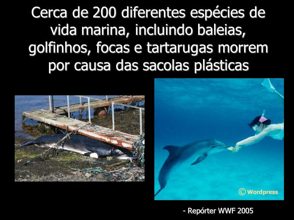 Cerca de 200 diferentes espécies de vida marina, incluindo baleias, golfinhos, focas e tartarugas morrem por causa das sacolas plásticas