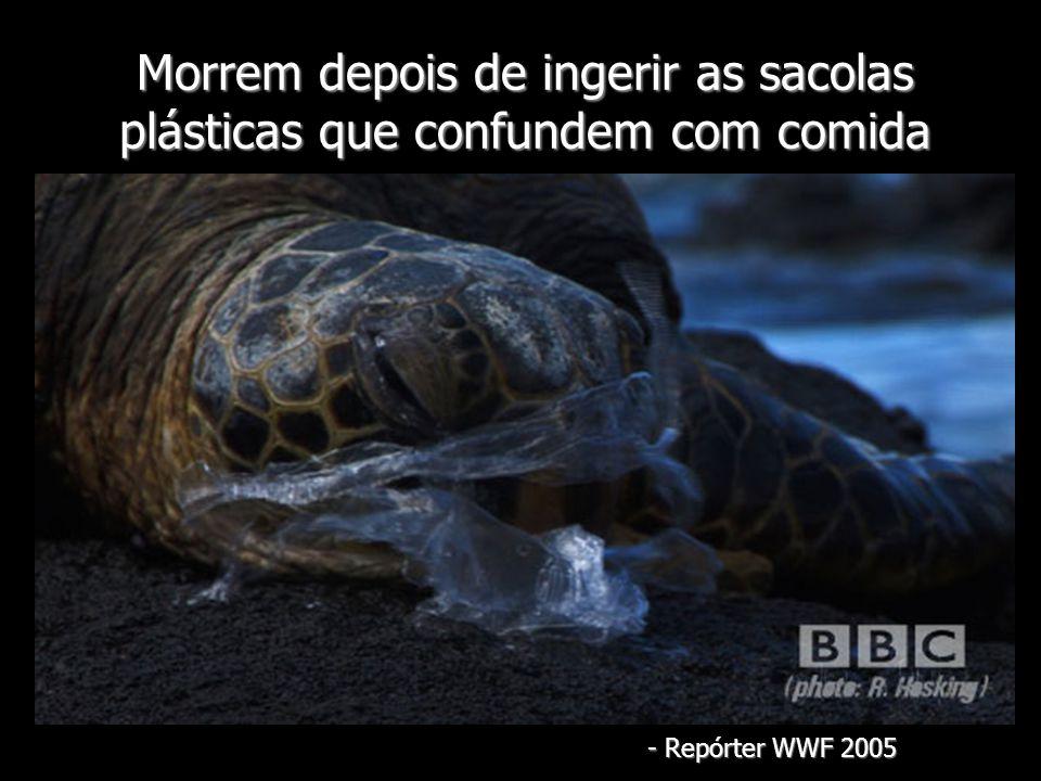 Morrem depois de ingerir as sacolas plásticas que confundem com comida