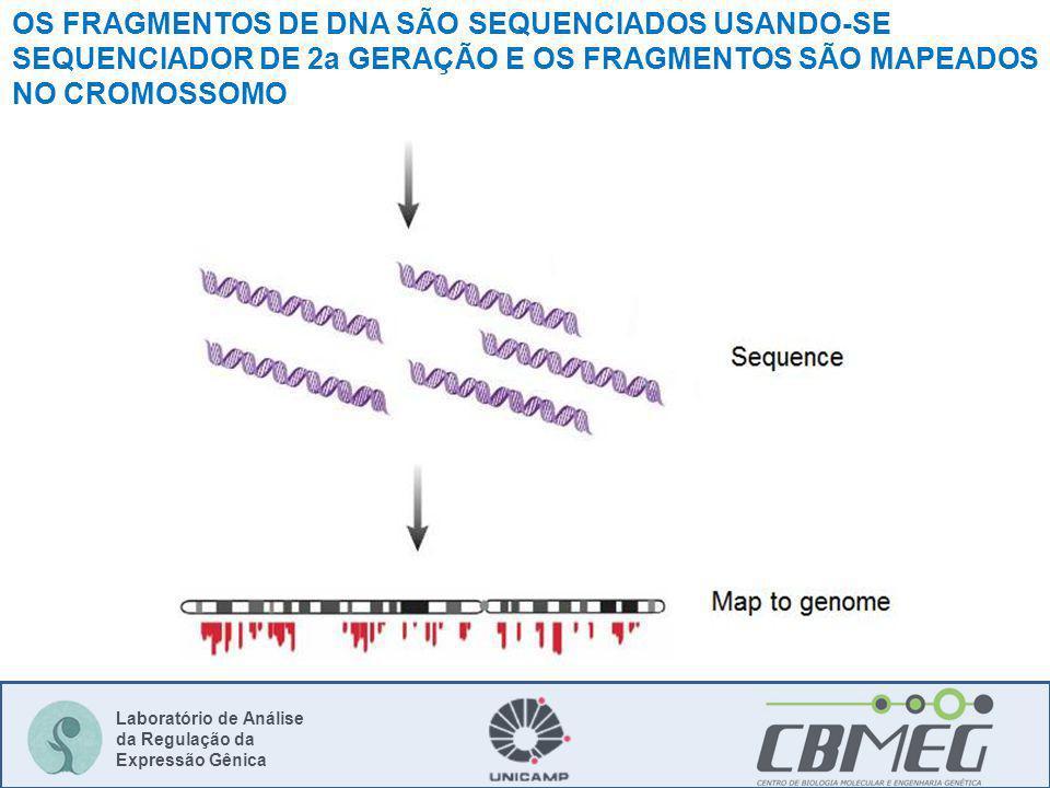 OS FRAGMENTOS DE DNA SÃO SEQUENCIADOS USANDO-SE SEQUENCIADOR DE 2a GERAÇÃO E OS FRAGMENTOS SÃO MAPEADOS NO CROMOSSOMO