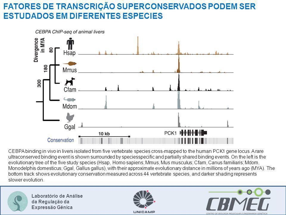 FATORES DE TRANSCRIÇÃO SUPERCONSERVADOS PODEM SER ESTUDADOS EM DIFERENTES ESPECIES