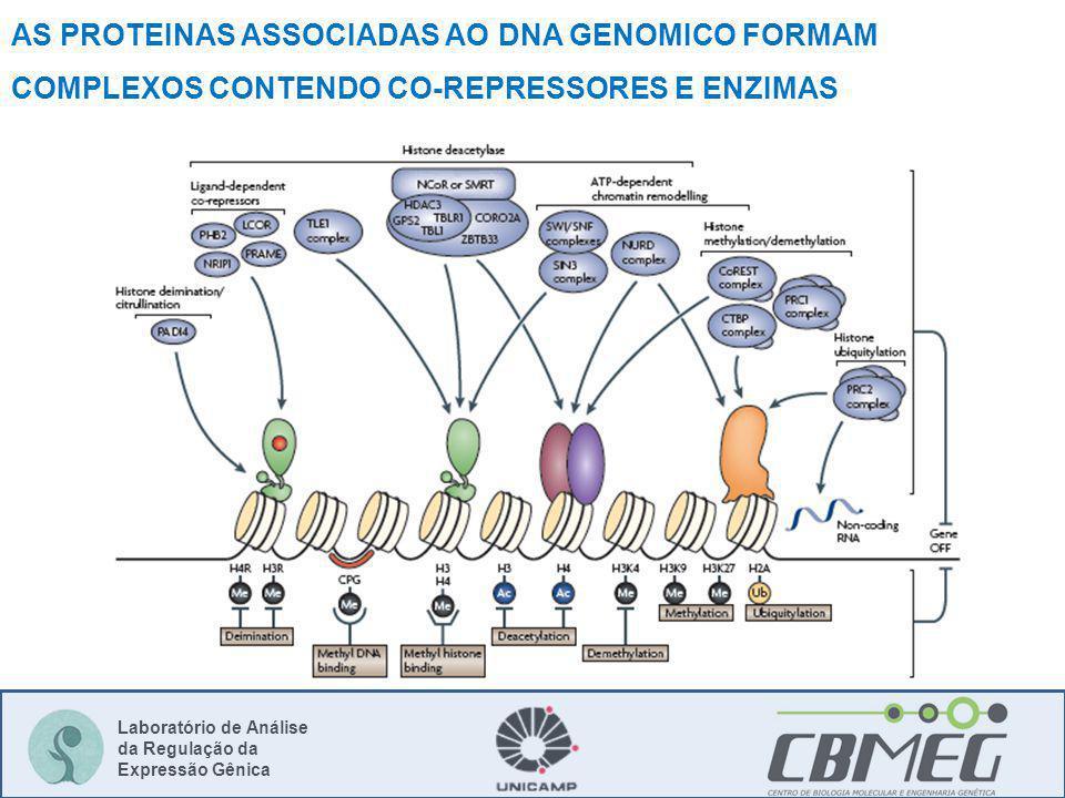 AS PROTEINAS ASSOCIADAS AO DNA GENOMICO FORMAM COMPLEXOS CONTENDO CO-REPRESSORES E ENZIMAS