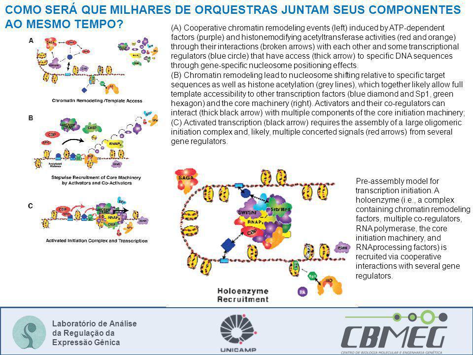 COMO SERÁ QUE MILHARES DE ORQUESTRAS JUNTAM SEUS COMPONENTES AO MESMO TEMPO