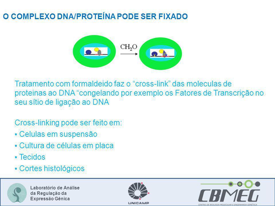 O COMPLEXO DNA/PROTEÍNA PODE SER FIXADO