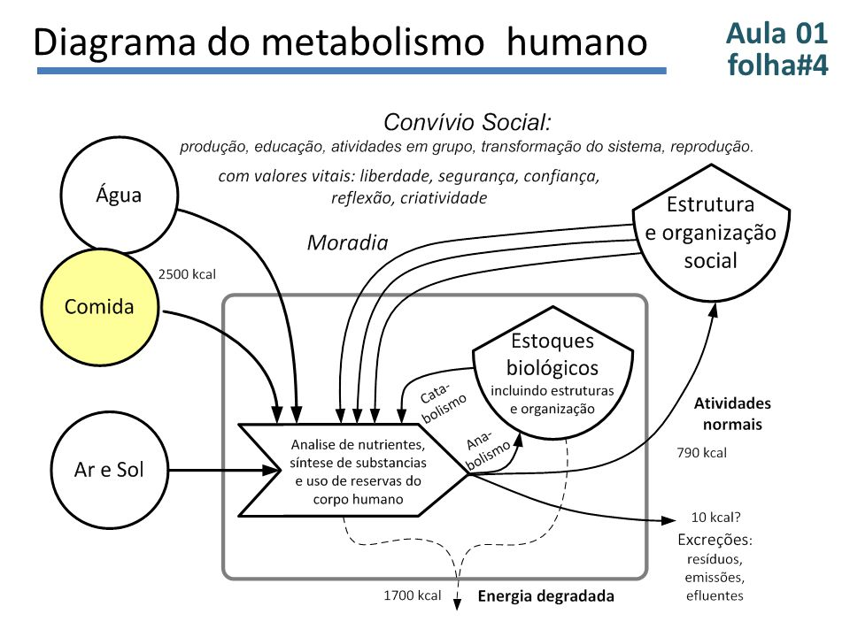 Diagrama do metabolismo humano