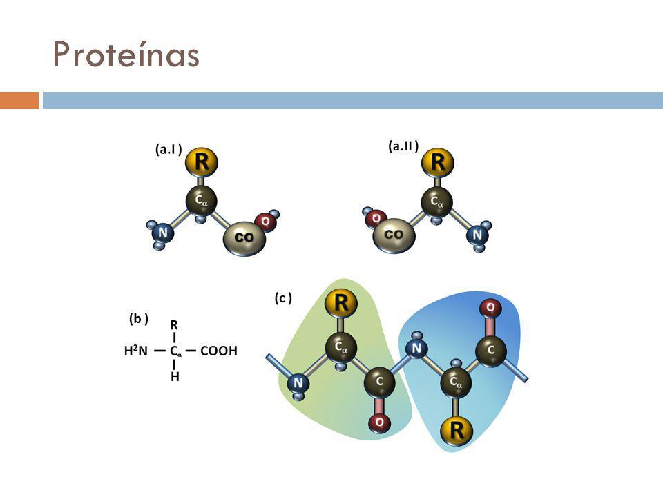 Proteínas Glicina – Cadeia lateral é um H