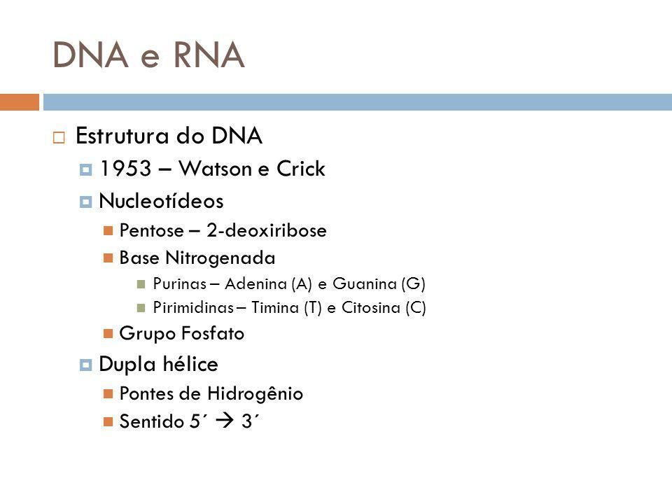 DNA e RNA Estrutura do DNA 1953 – Watson e Crick Nucleotídeos
