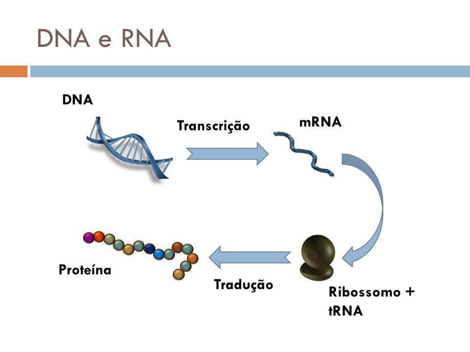 DNA e RNA DNA mRNA Transcrição Proteína Ribossomo + tRNA Tradução