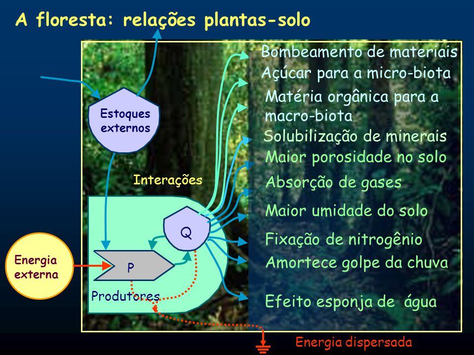 A floresta: relações plantas-solo