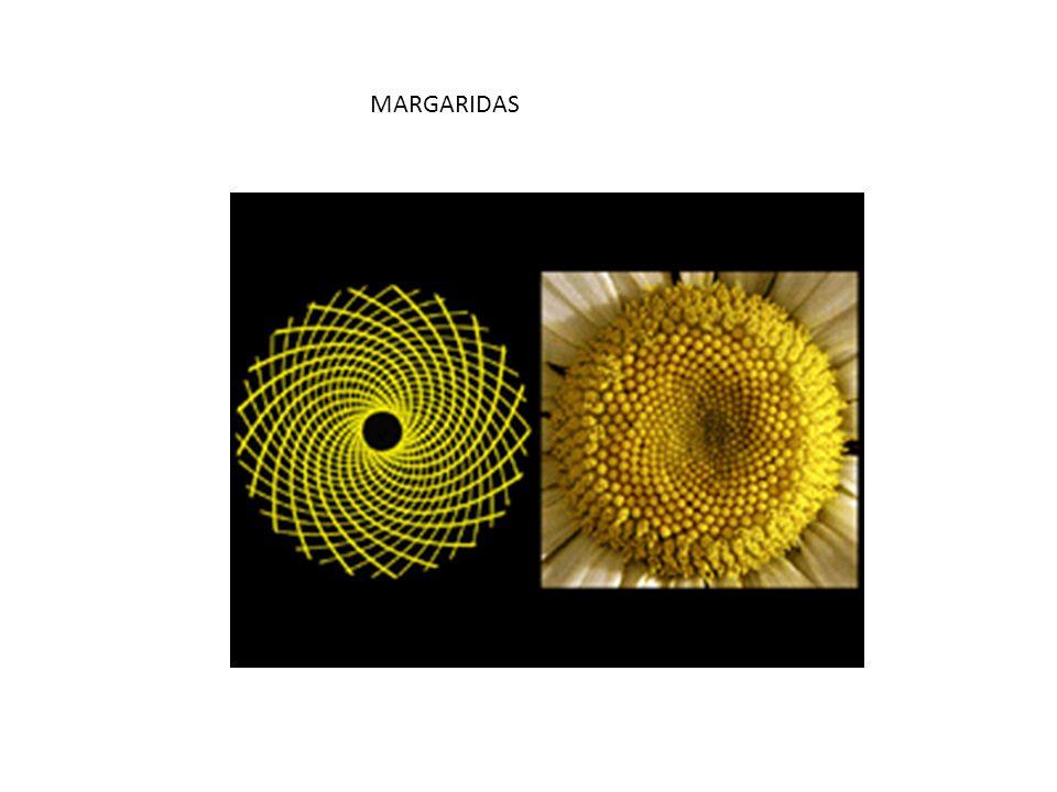 MARGARIDAS