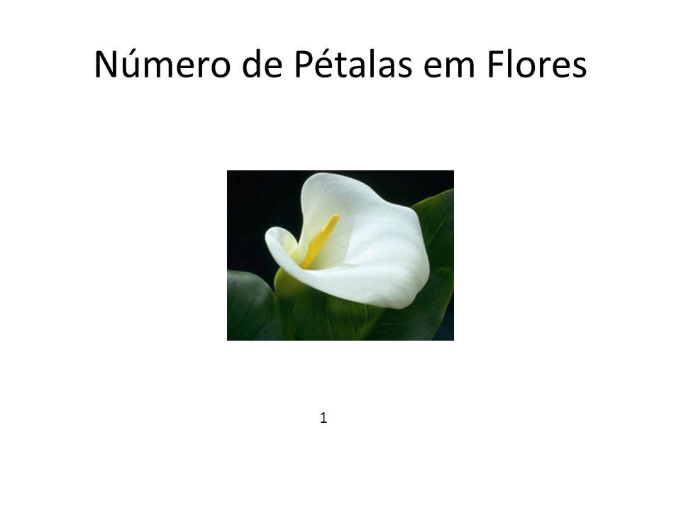 Número de Pétalas em Flores