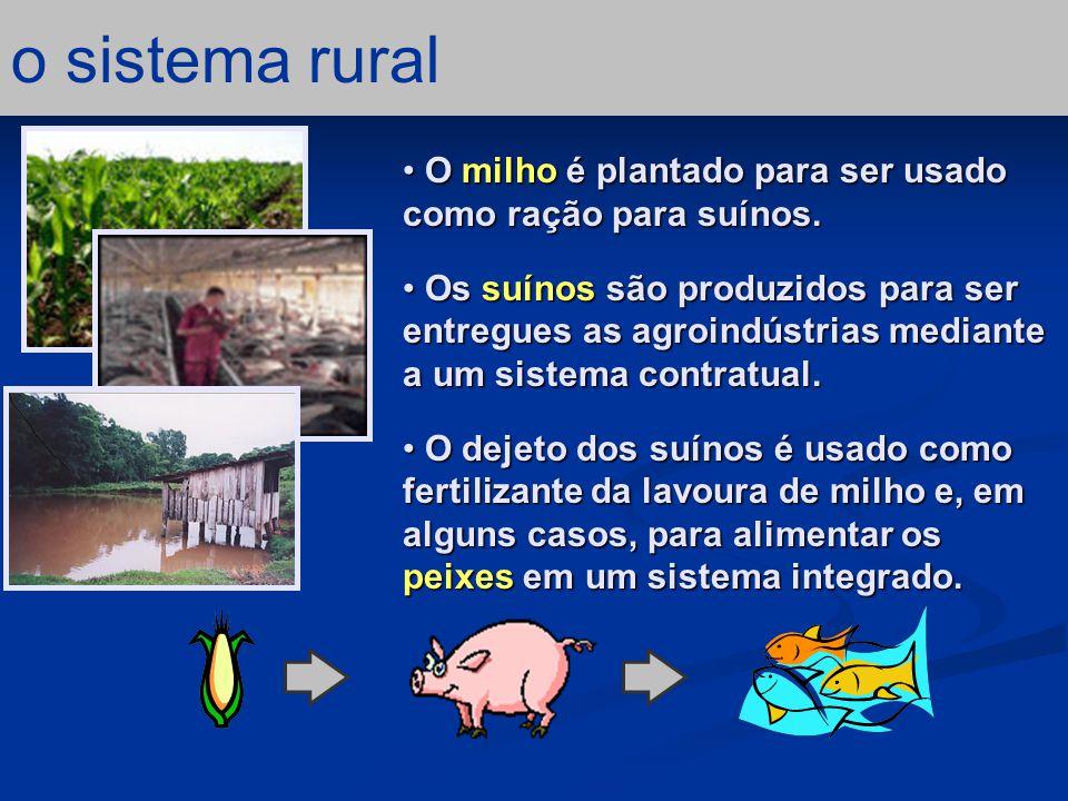 o sistema rural O milho é plantado para ser usado como ração para suínos.