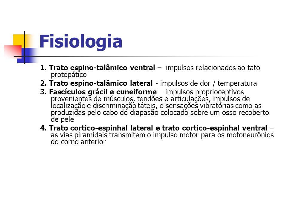Fisiologia 1. Trato espino-talâmico ventral – impulsos relacionados ao tato protopático.