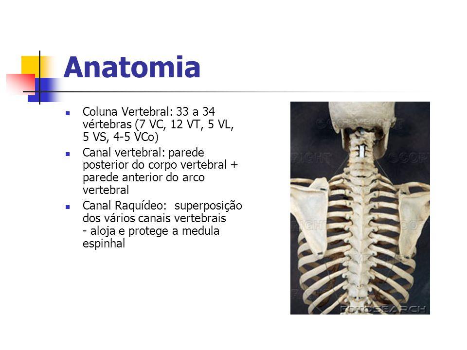 Anatomia Coluna Vertebral: 33 a 34 vértebras (7 VC, 12 VT, 5 VL, 5 VS, 4-5 VCo)