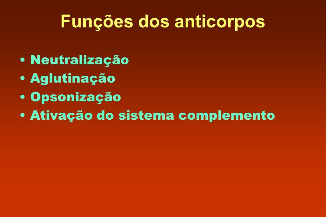 Funções dos anticorpos