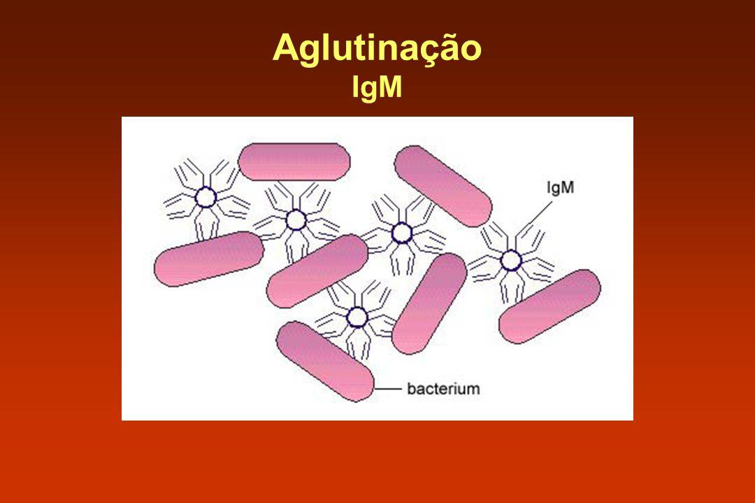 Aglutinação IgM