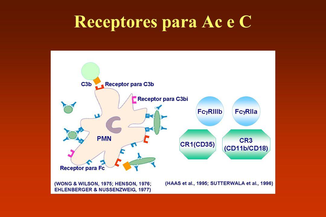 Receptores para Ac e C