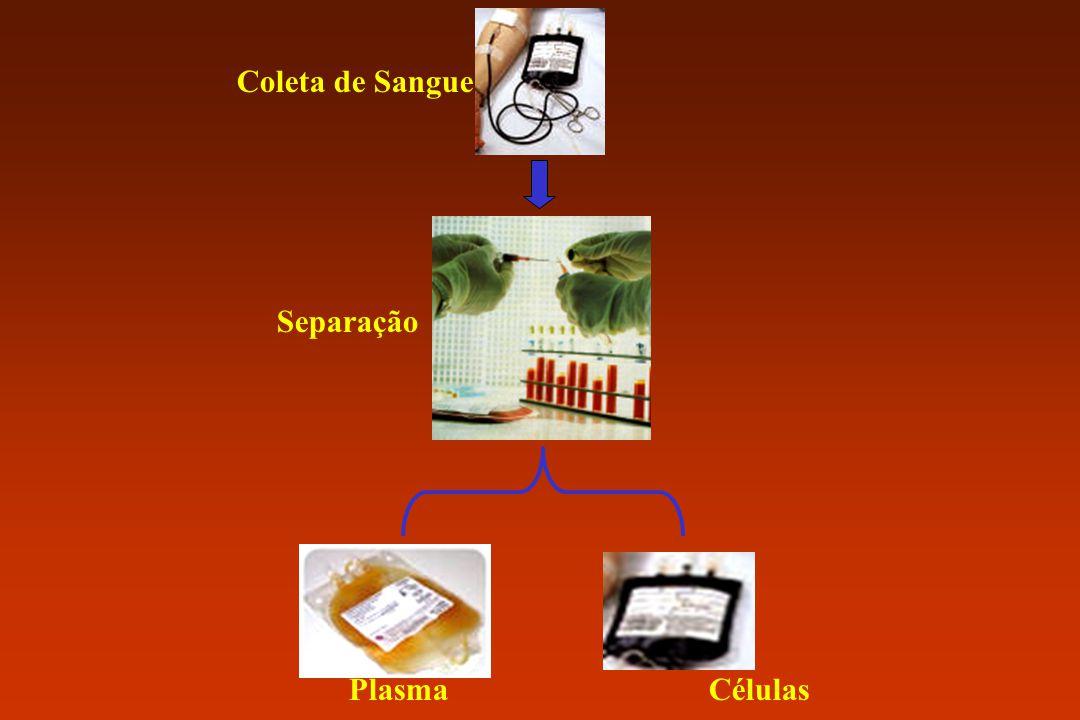 Coleta de Sangue Separação Plasma Células