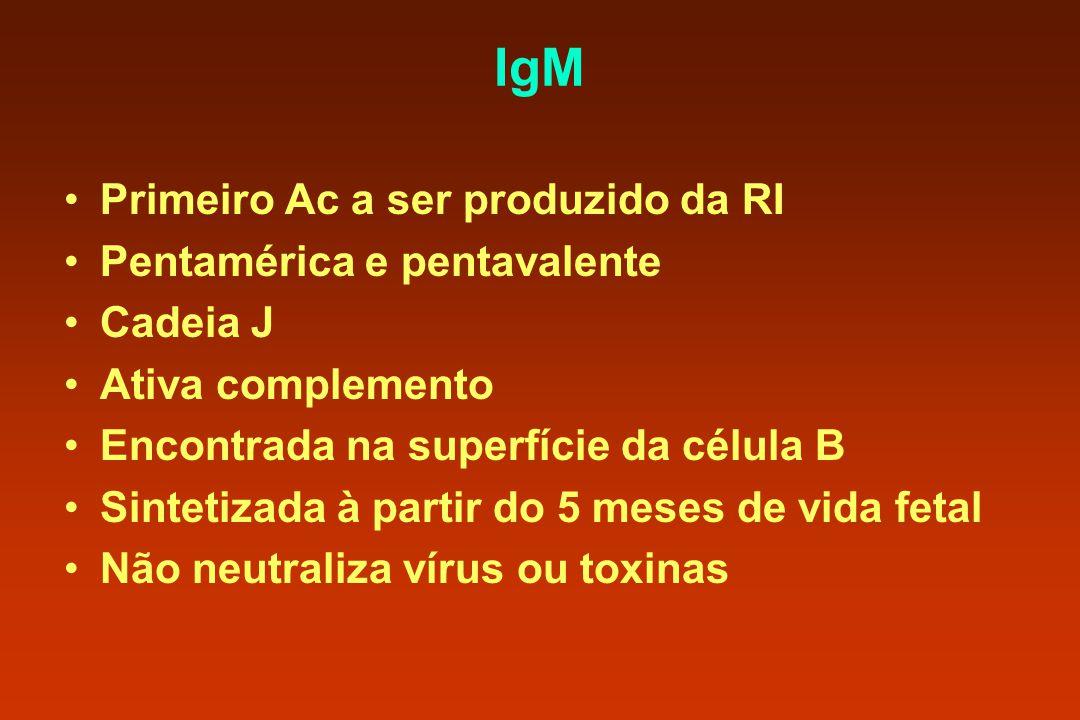 IgM Primeiro Ac a ser produzido da RI Pentamérica e pentavalente