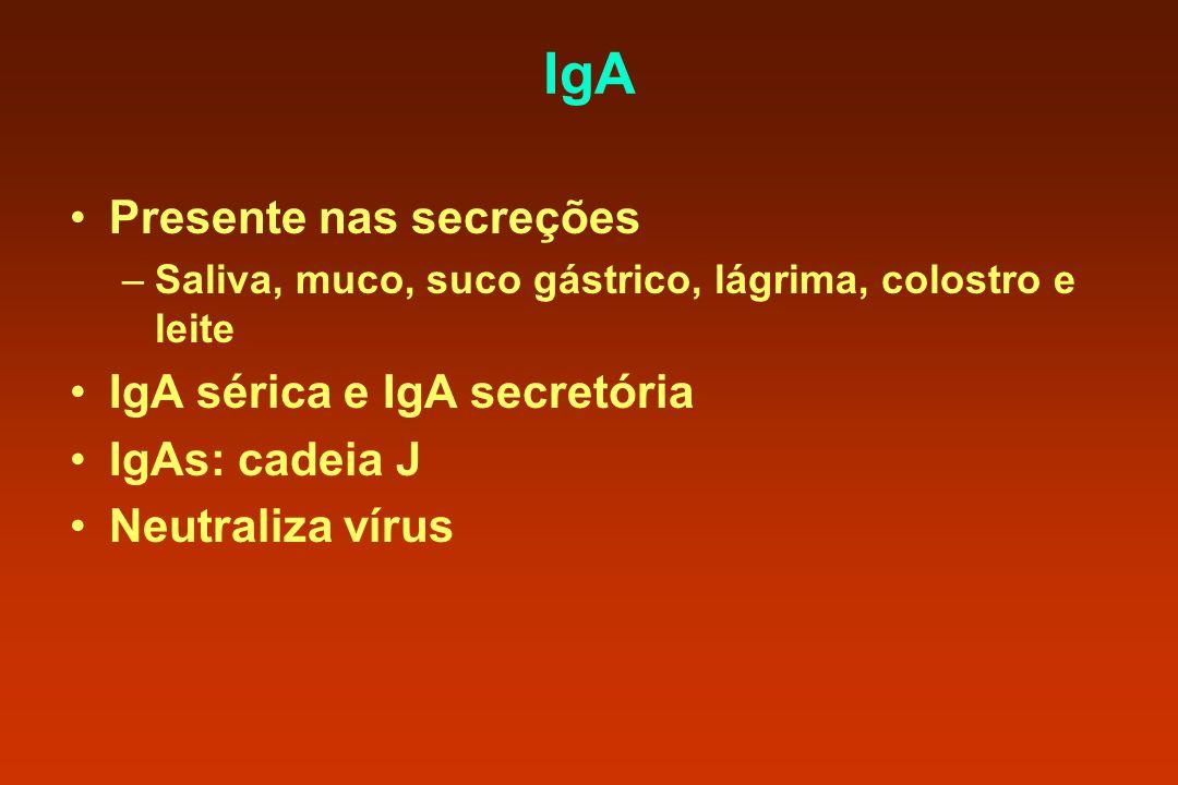 IgA Presente nas secreções IgA sérica e IgA secretória IgAs: cadeia J