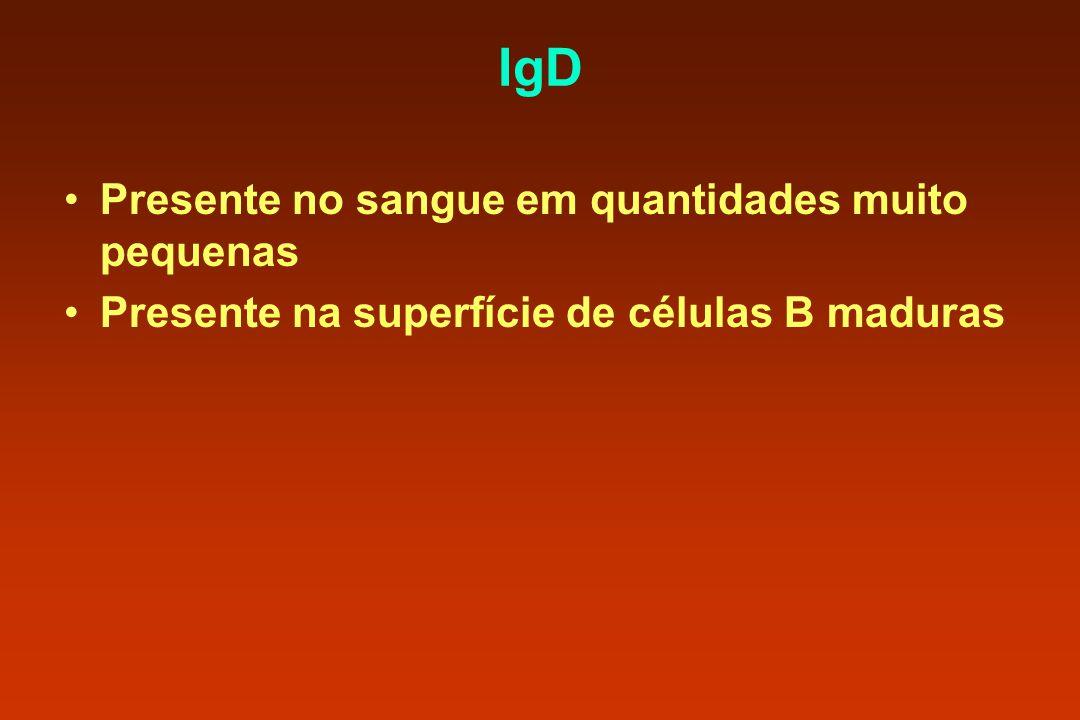 IgD Presente no sangue em quantidades muito pequenas