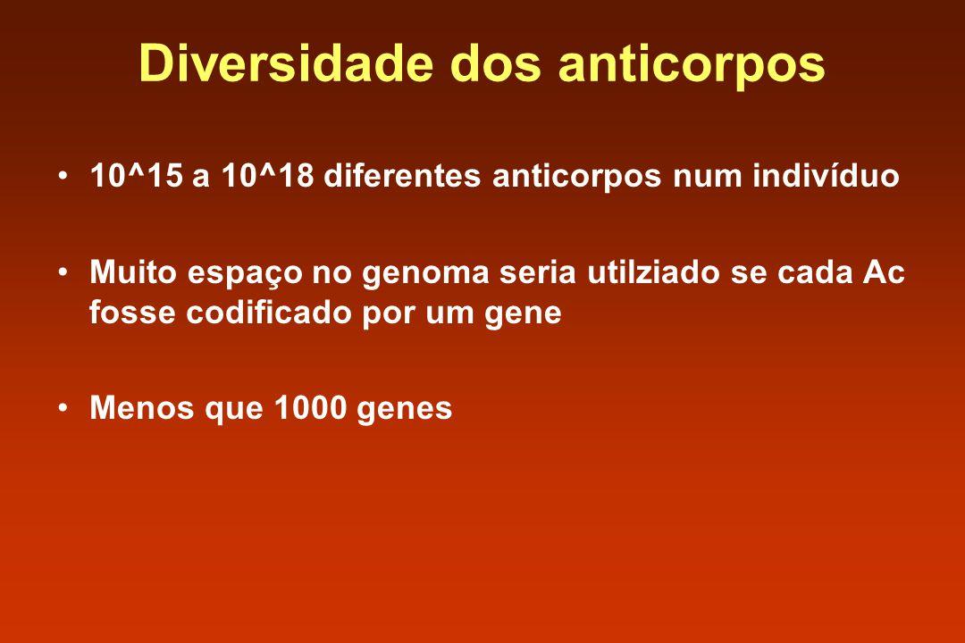 Diversidade dos anticorpos