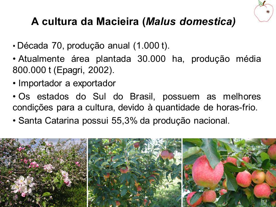 A cultura da Macieira (Malus domestica)