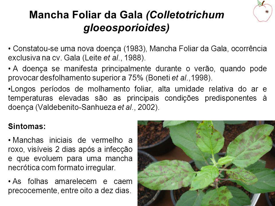 Mancha Foliar da Gala (Colletotrichum gloeosporioides)