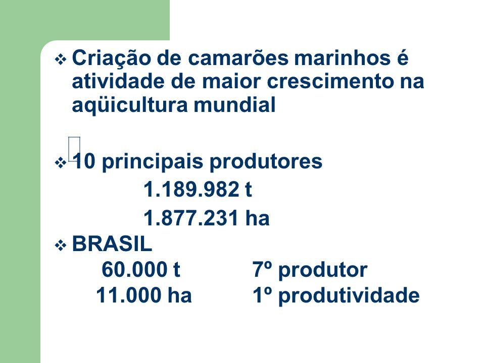 Criação de camarões marinhos é atividade de maior crescimento na aqüicultura mundial