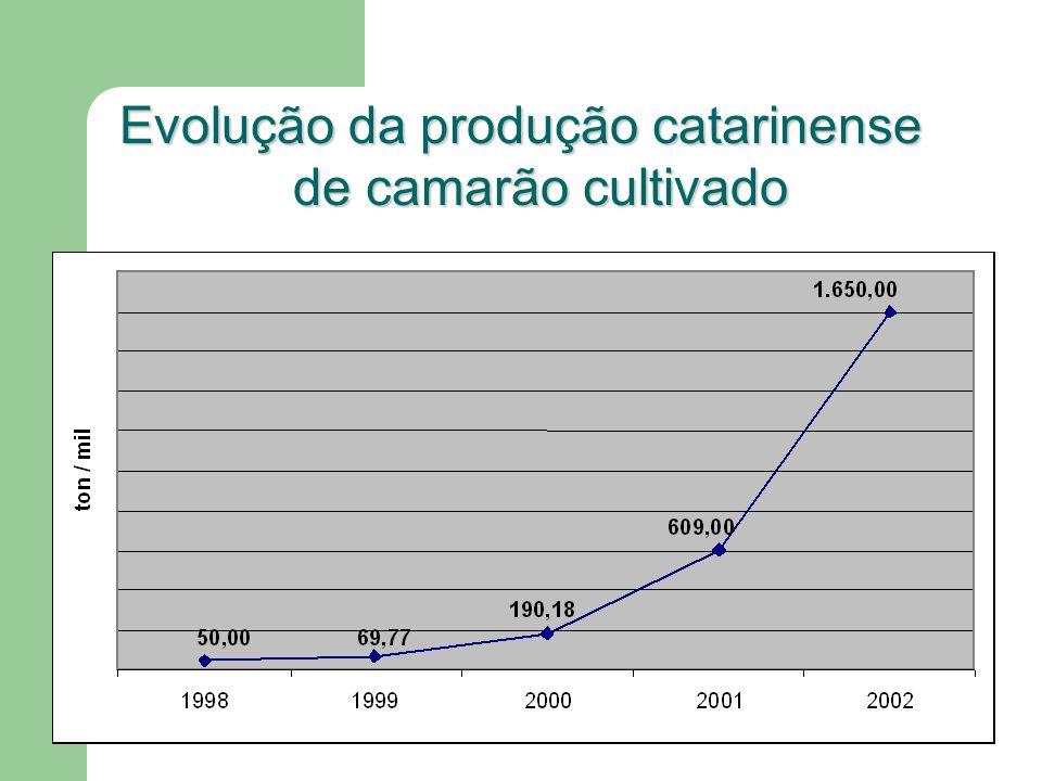 Evolução da produção catarinense de camarão cultivado