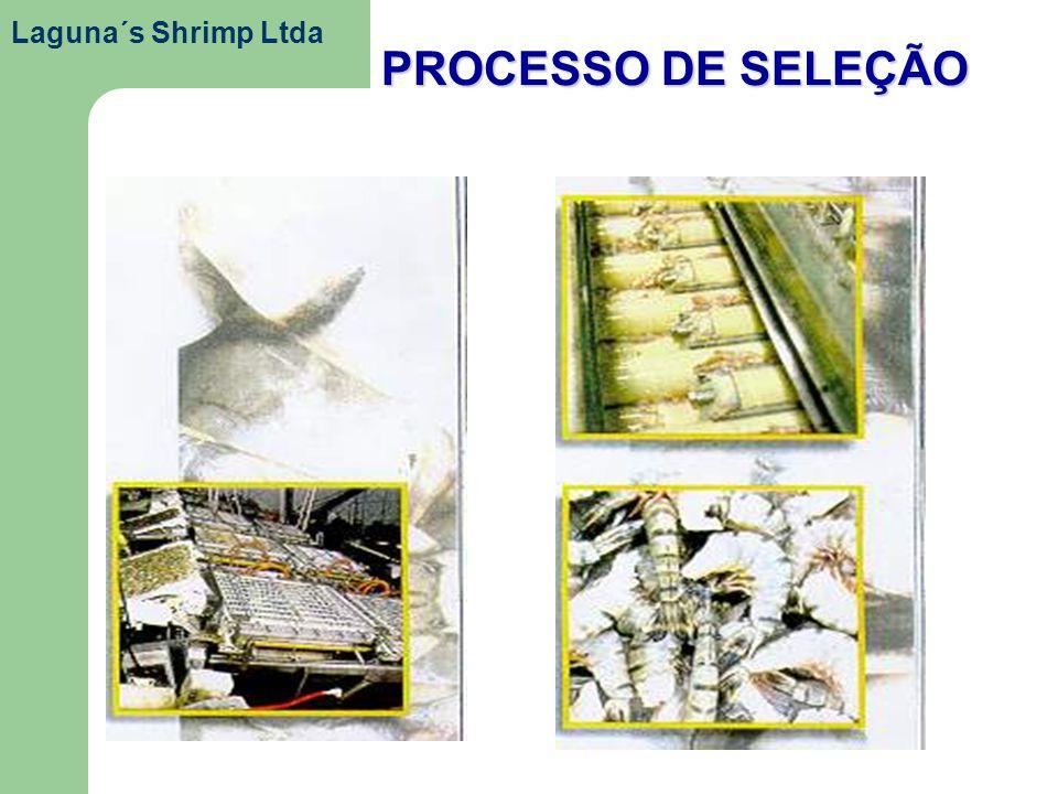 Laguna´s Shrimp Ltda PROCESSO DE SELEÇÃO
