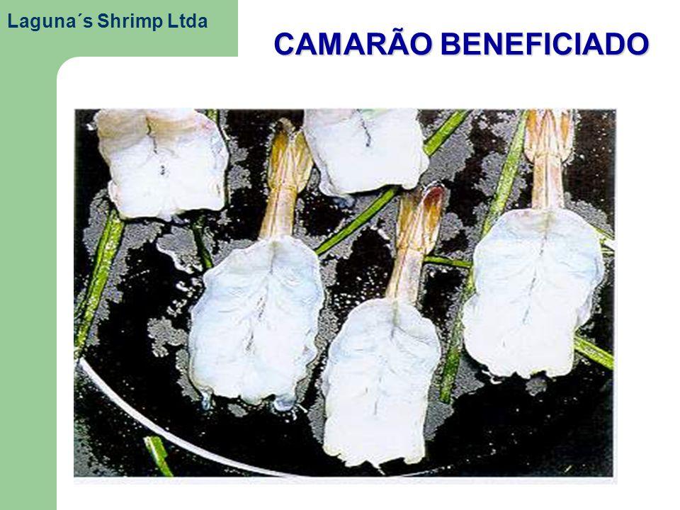 Laguna´s Shrimp Ltda CAMARÃO BENEFICIADO