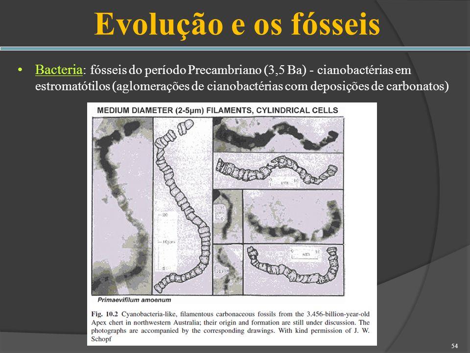 Evolução e os fósseis