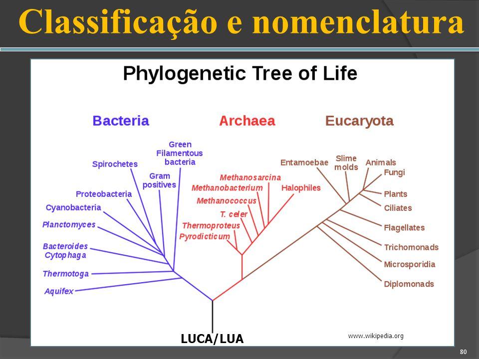 Classificação e nomenclatura