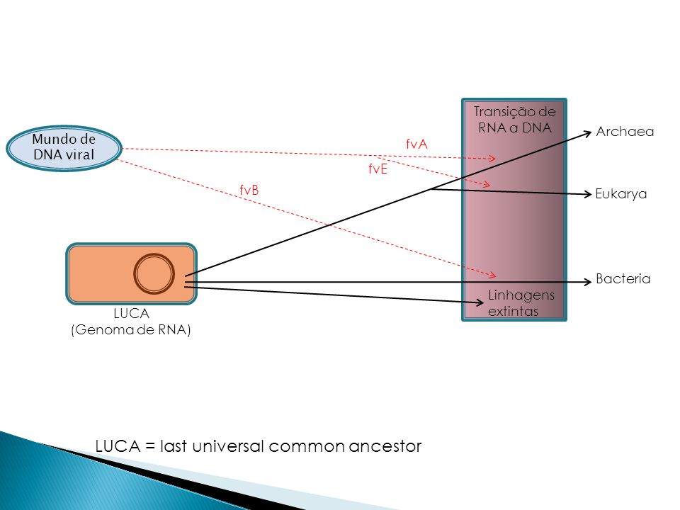 LUCA = last universal common ancestor