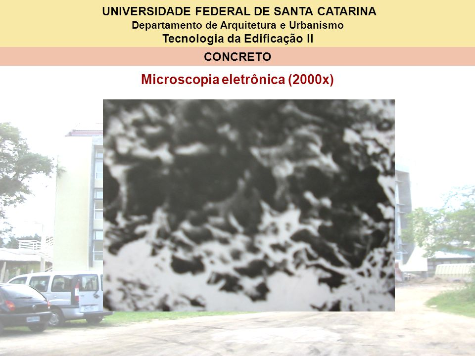 Microscopia eletrônica (2000x)