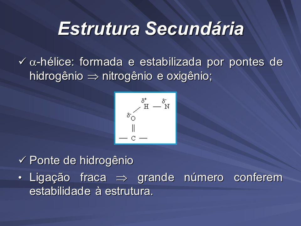 Estrutura Secundária -hélice: formada e estabilizada por pontes de hidrogênio  nitrogênio e oxigênio;